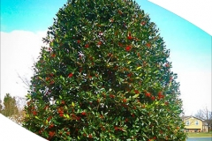 Eaglestone Holly