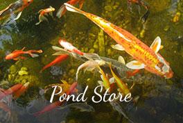 ponds-store