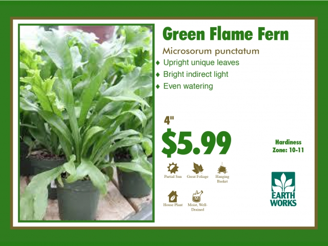Fern Green Flame