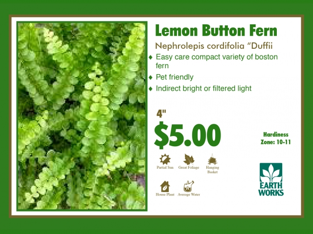 Fern Lemon Button