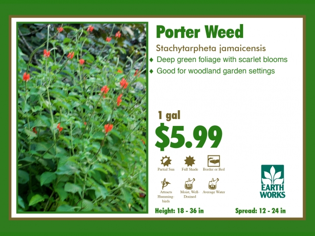 Porter weed