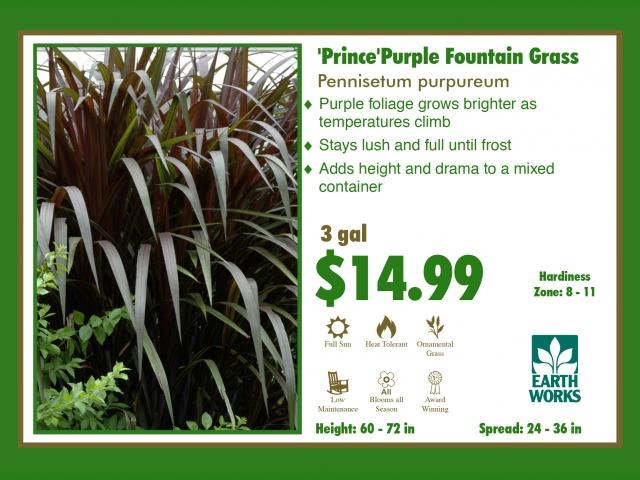 Purple Prince Fountain