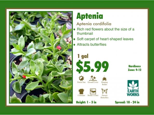 Aptenia