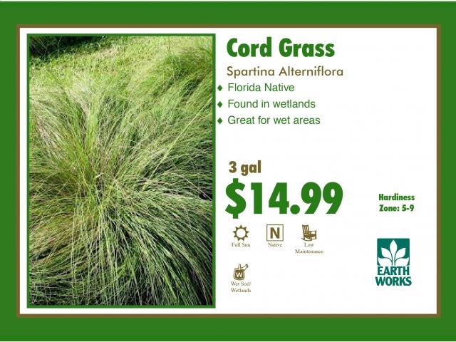 Cord grass