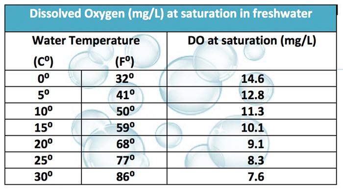 Low dissolved oxygen koi