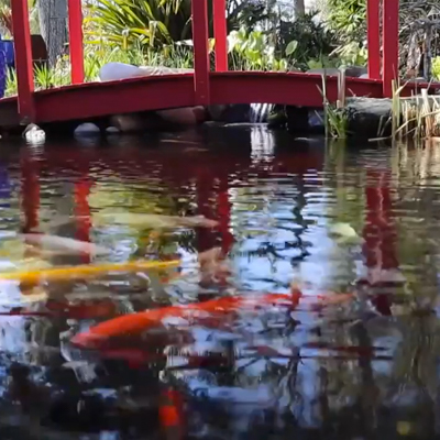 Earth Works available pond optons for northeast florida
