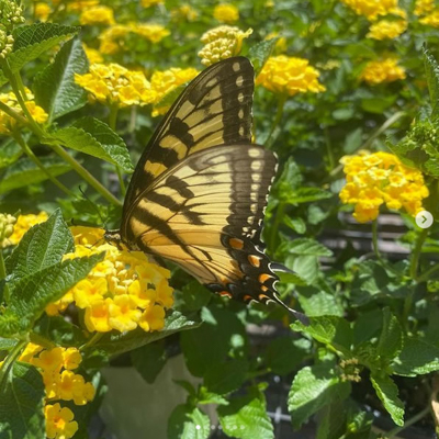 June Lawn & Garden Care for Northeast Florida