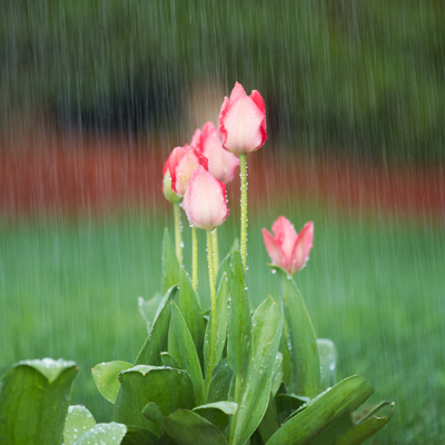 Soggy Yard Problems & Fixes